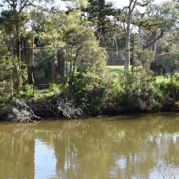 kananook creek
